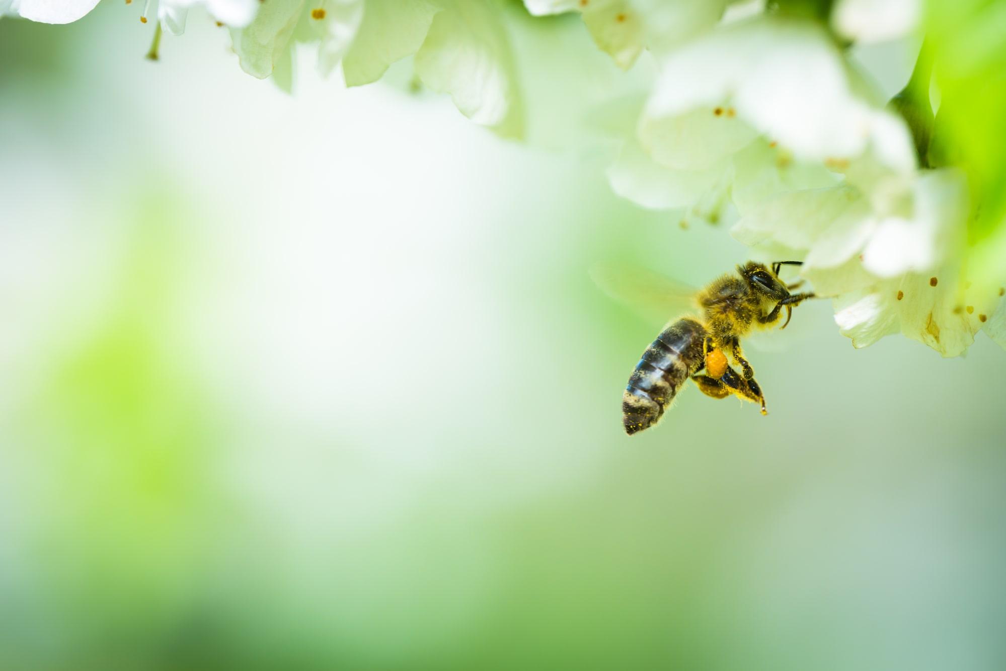 insektenfreundlicher Garten für Bienen